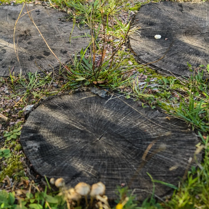 Садовая дорожка из древесного спила, пригород Киева